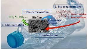 Plastic Biodegradation